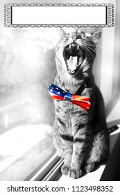 Happy 4th of July conceptual image with a proud American Tabby cat wearing a patriotic bow tie. Black and white image other than the tie. With copy space.
