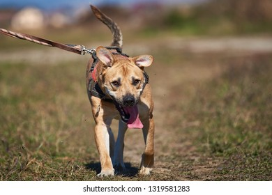 Happy and active dog outdoors in the grass