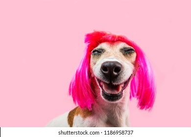 Happy adorable smiling dog in pink wig