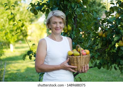 Happy adult woman with wicker basket with fresh ripe apples and pears standing near pear tree in garden or farm. Cheerful elderly senior female. Happy retirement. Pensioner person gathering, summer