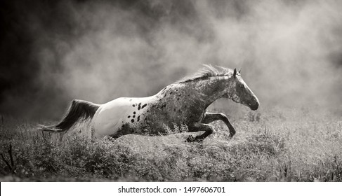 Appaloosa Images, Stock Photos & Vectors | Shutterstock