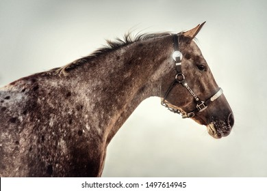 Appaloosa Images, Stock Photos & Vectors | Shutterstock