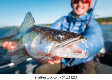 Happy angler holds angry Zander fish being in the boat on the river