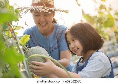 Happy Asian child helping her mother harvest melon in green house plant
