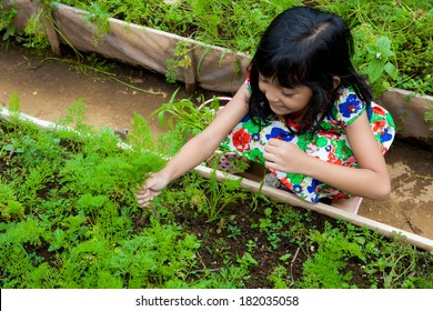 Happy Asian Children harvesting carrots in green farm