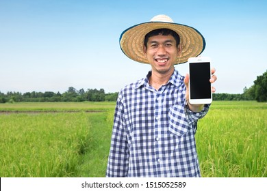 Happy Asian Farmer man using smartphone looking camera. Havest rice farm with technology