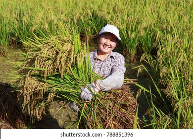 happy asian female farmer working in the rice paddy