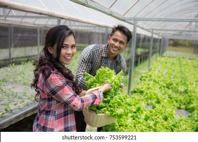 happy asian male and female harvesting vegetable from their own hydrophonic farm