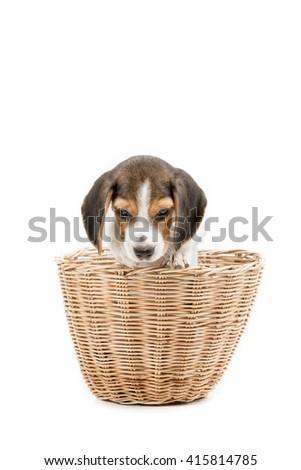 Hide and Seek Puppy