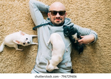 Happy bearded bald man in sunglasses lying at home on carpet with three little chihuahua puppies. Family together again. Lovely dogs playing and resting. Vintage male portrait with adorable pets.