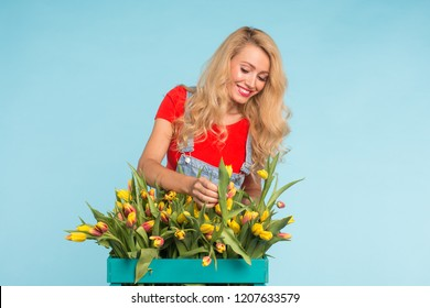 Happy beautiful blonde caucasian woman with big box of tulips on blue background.