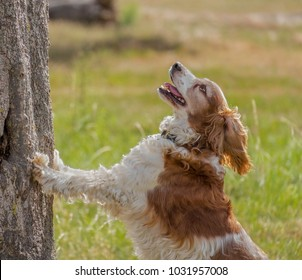 happy beautiful dog, brown and white