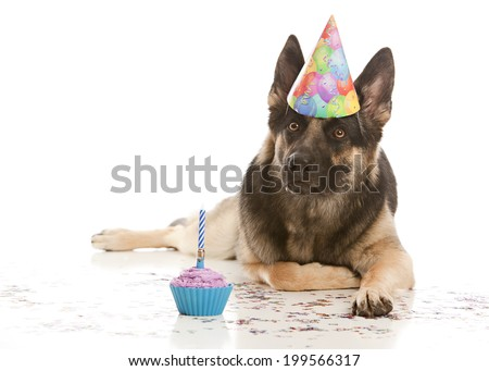 Happy Birthday Beautiful German Shepherd Dog Wearing A Hat And Lying In Confetti Next