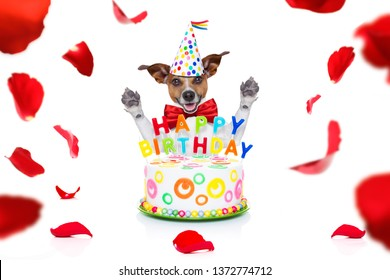 happy  birthday jack russell dog with a present or gift with lots of roses flying around in love for valentines or aniversary, isolated on white background, and a big cake