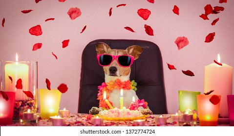 happy  birthday jack russell dog with lots of roses flying around in love for valentines or aniversary, cake ,sunglasses and candles