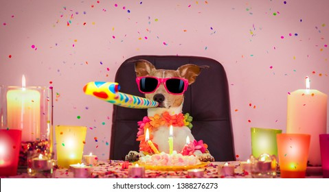 happy  birthday jack russell dog with lots of confetti around in love for valentines or aniversary, cake ,sunglasses and candles, blowing a whistle