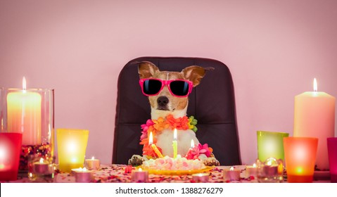 happy  birthday jack russell dog with lots of confetti around in love for valentines or aniversary, cake ,sunglasses and candles