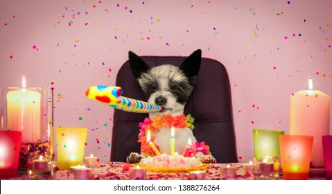 happy  birthday poodle dog with lots of confetti flying  around in love for valentines or aniversary, cake with candles , blowing a whistle