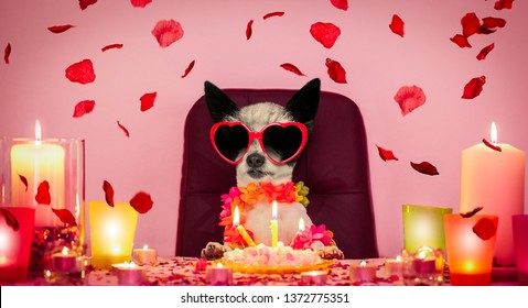 happy  birthday poodle dog with a present or gift with lots of roses flying around in love for valentines or aniversary, cake and sunglasses, and candles