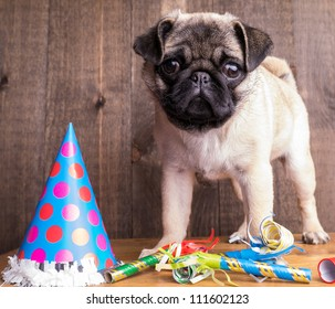 Happy Birthday Pug Puppy