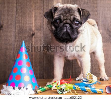 Happy Birthday Pug Puppy