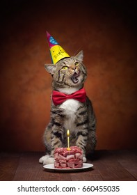 happy birthday's cat