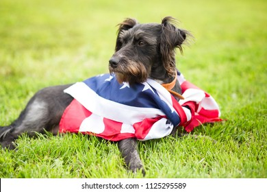 Happy black dog with american flag in the grass