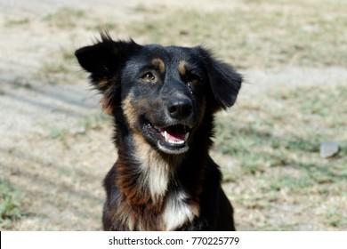 Happy black Dog portraits background