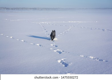 Happy black dog running on frozen lake covered in snow on sunny winter day