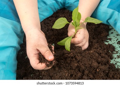 Happy blond boy helps plant seedlings for planting in open ground at parents' farm. Little kid holding seedling in plastic pots on the domestic garden. Hands. Day Earth. Close up view. Selective focus