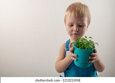 Happy blond kid with flower pot for growing seedlings. Bright child emotions. Green plant in black earth. Boy is happy at home. Preparation for new season of farmer. Tomato, pepper, eggplant