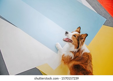 happy border collie dog stands with his paws on a colorful wall outdoors