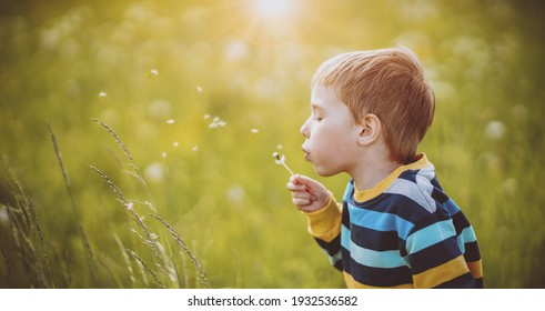 Happy boy blowing on the white dandelion's blowball at sunny summer evening. Child outdoors in nature
