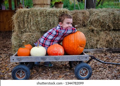 happy boy on a farm with pumpkins. pumpkin patch. The child sitting on a wooden carriage with pumpkins