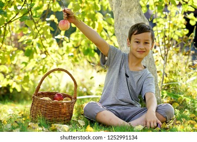 happy boy outdoors in autumn garden with apples
