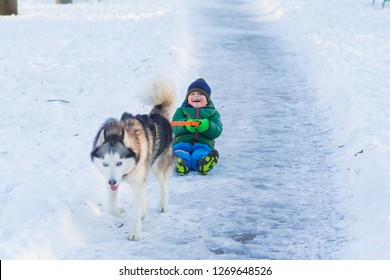 Happy boy play with husky dog in winter park full of snow