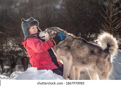 Happy boy playing with an Alaskan Malamute outdoors in the winter mountains. Love and friendship of the child and dog. Isolation in quarantine of coronavirus covid19. Pets and people. Child hugs husky