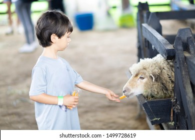 Happy Boy Playing with Sheep in the Farm