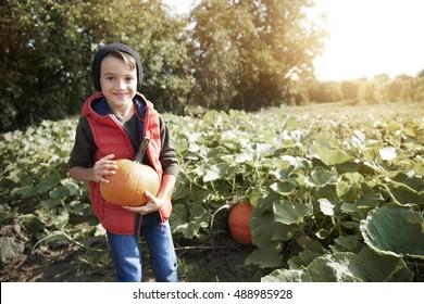 Happy boy in the pumpkin field