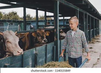 happy boy pushing wheelbarrow with grass and looking at cows in stall