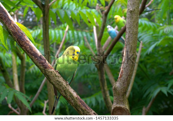 Happy budgie on the branch