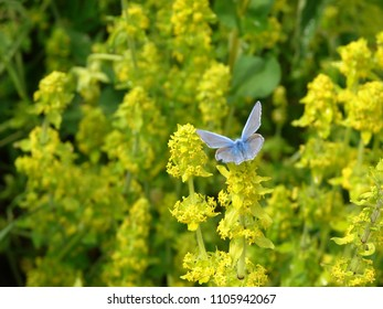 the happy butterfly