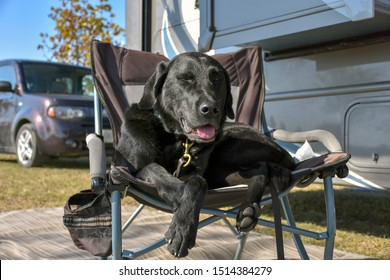 A happy camper, an adult black Labrador retriever sits contentedly on a chair outside the family motorhome in rural Georgia, USA.