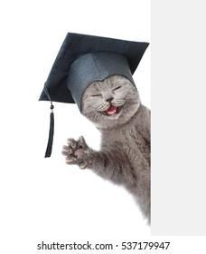 Great Graduation Cap Black Adorable Dog - happy-cat-black-graduation-cap-260nw-537179947  Trends_792346  .jpg