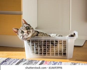 Happy cat in a box