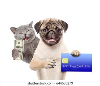 Happy Cat with dollars USA and funny puppy hold credit card in paws. isolated on white background