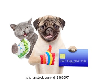 Happy Cat with Euro and Funny puppy hold credit card and showing thumbs up. isolated on white background