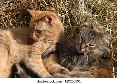 happy cat on rustic barn