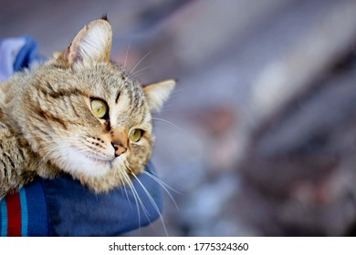Happy cat in owner hands - care trust concept. Close up human holding cute purring tabby cat. Cat muzzle in man hands. Love cats & humans. Relationship, weasel. Gray tabby cute kitten. Pet lifestyle