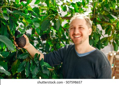 Happy caucasian man in his garden showing a ripe avocado fruit on the avocado tree sunny day